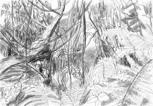 Far-Cry-Rook-Islands-Jungle-3-Bleistift-auf-Papier-105-x-148-cm-2013