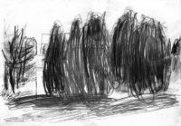 Gärten-Sichtschutz-mit-Lebensbäumen-Bleistift-auf-Papier-105-x-148-cm-2012
