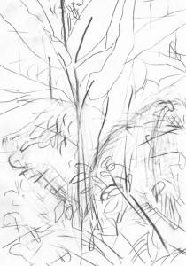 Botanischer-Garten-1