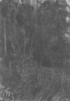Rhododendron_Kohle-auf-Papier_140x199_2016